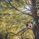CampWildfire-TreeClimbing-001
